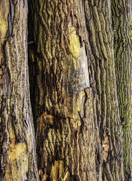 Dead Wood by RLF