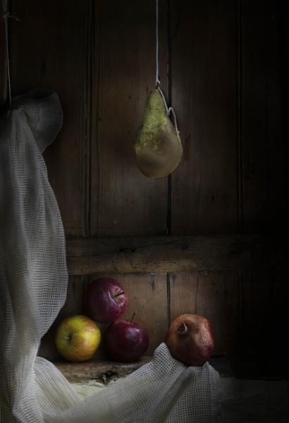 Low hanging fruit by HelenaJ