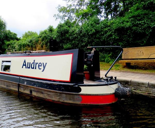 Audrey by ddolfelin