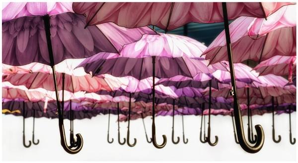 Korean  Umbrellas by happysnapper