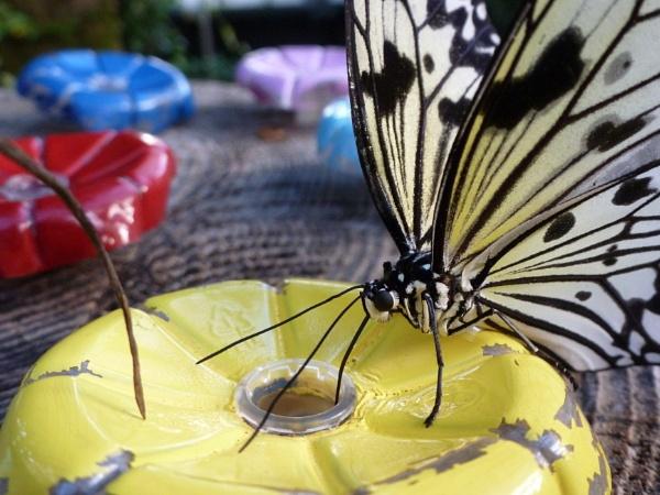 Butterfly by DebsB