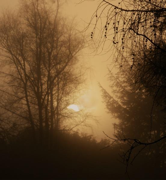 Autumn evening by Coracre