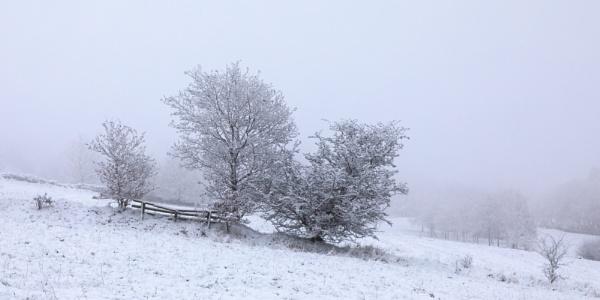 Snow & Fog by Philpot
