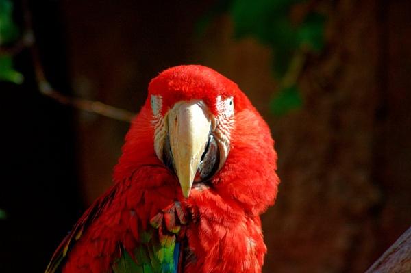 Pretty Polly by mj.king