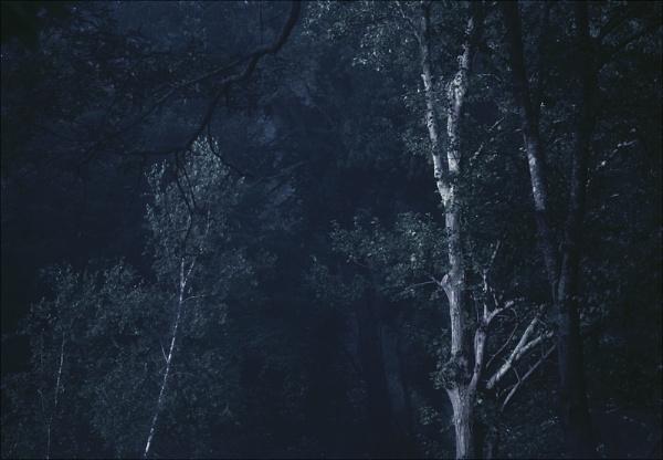 a dark wood by carmenfuchs