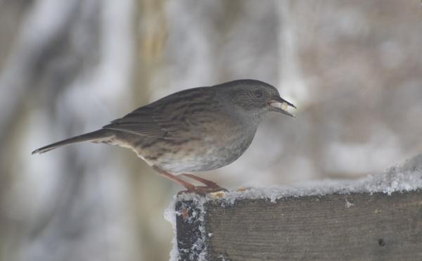 Hungry Bird by ChristopherA