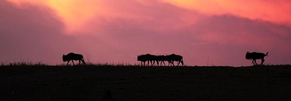The long trek by Karuma1970