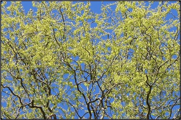 springbloom by FabioKeiner