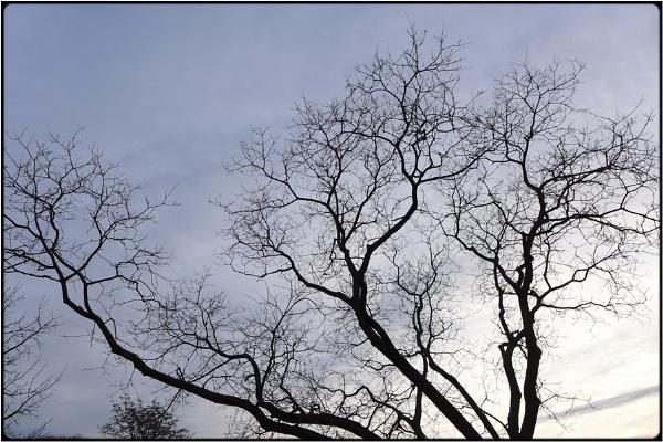 freezing trees by FabioKeiner
