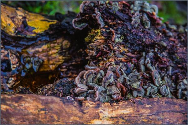 fungal eruption... by estonian