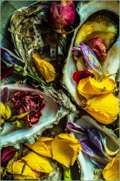petals and shells... by estonian