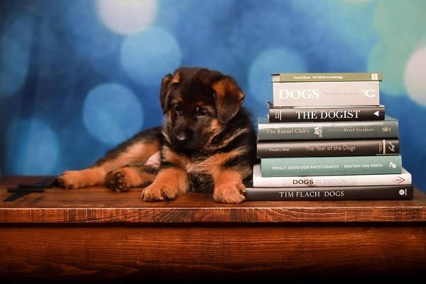 Bookworm by memphis