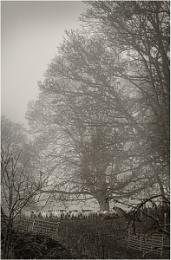 The flock on a misty morning.