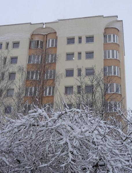 Snow on a tree by SauliusR