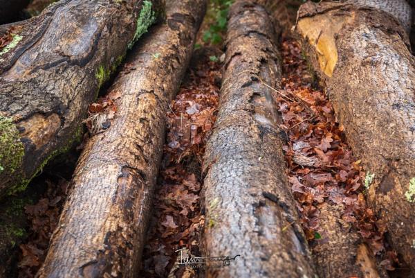 Wet logs and Leaves by IainHamer
