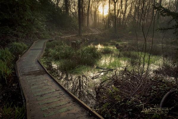 Foggy Common by IainHamer