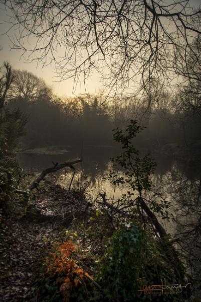 Foggy Common 2 by IainHamer