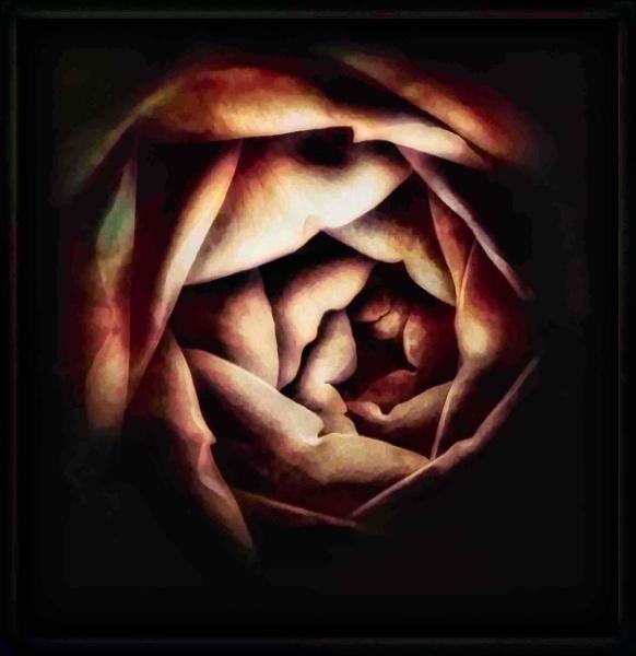 Rose by adagio