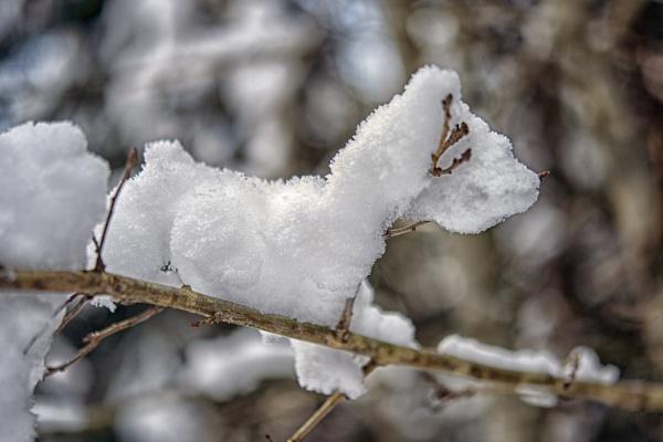 Snow dog by Leikon