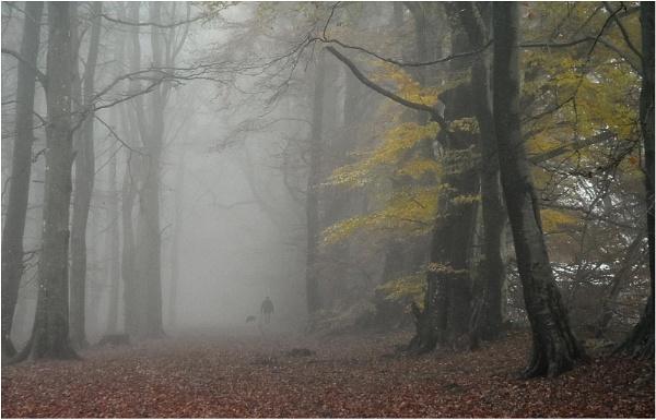 November Morning by MalcolmM