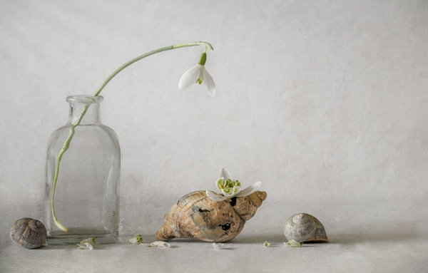 Snowdrops and Shells by chase