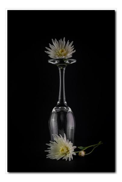Wine Glass by Pamsar