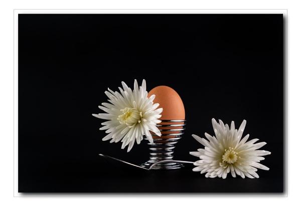 Egg Still Life by Pamsar