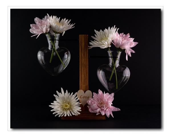 Love Chrysanthemums by Pamsar