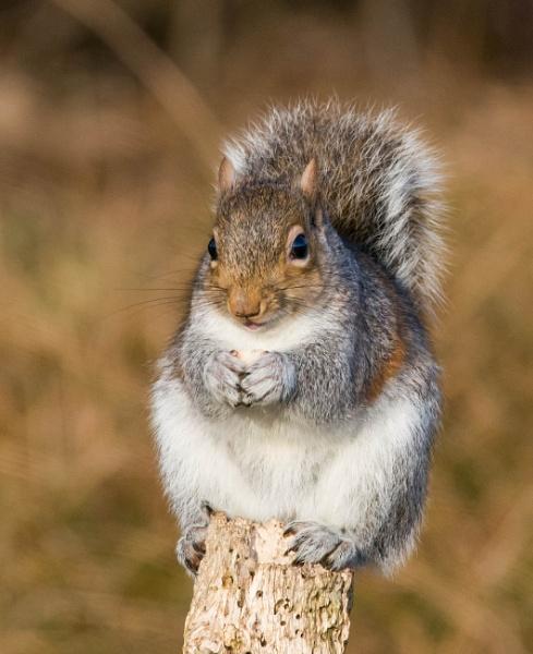 squirrel by madbob