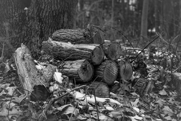 logs by Merlin_k