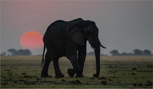 Dusk at Chobe by mjparmy