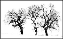 Snowy Trio
