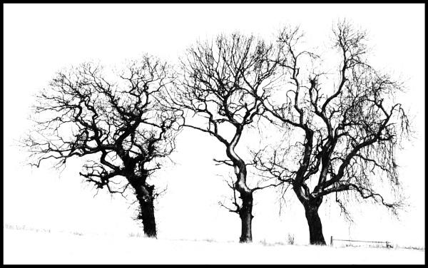 Snowy Trio by nstewart