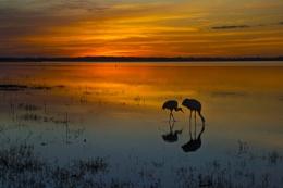 Myakka Lake at sunset