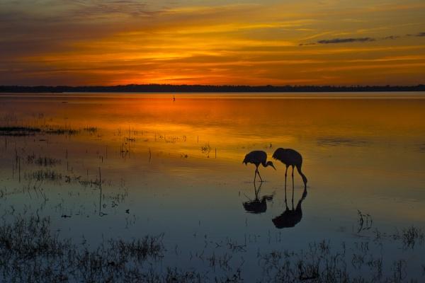 Myakka Lake at sunset by jbsaladino