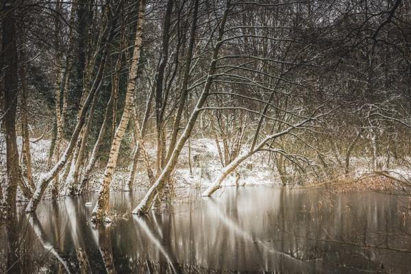 Woodland Pond by Scooby10