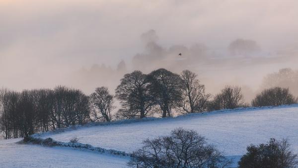 Mayfield Mist by martinl