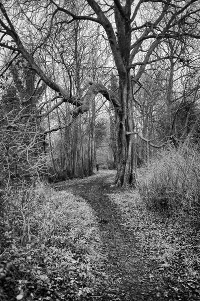 A Muddy Path by RolandC