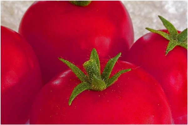 Garden Fresh  (best viewed large) by gconant