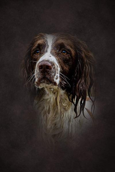 Dog 1 by kevmor999