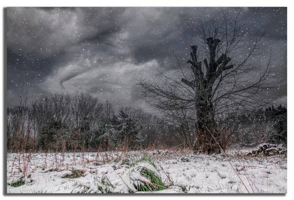 A Winters Scene. by carper123