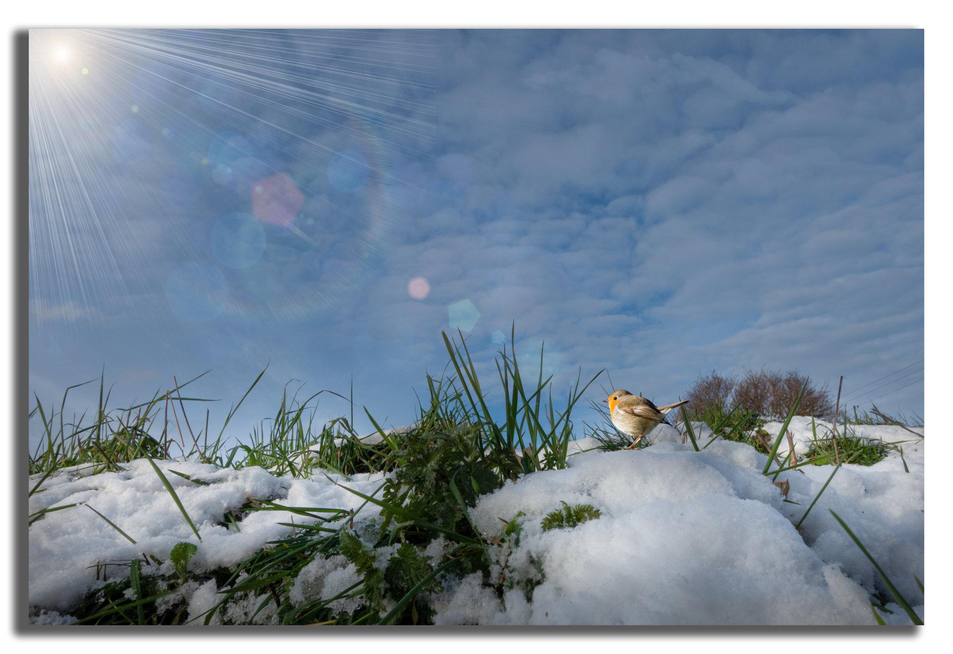 Enjoying the Winter Sun.