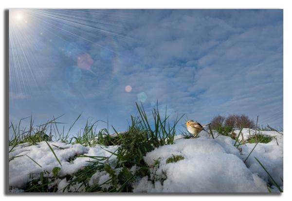 Enjoying the Winter Sun. by carper123