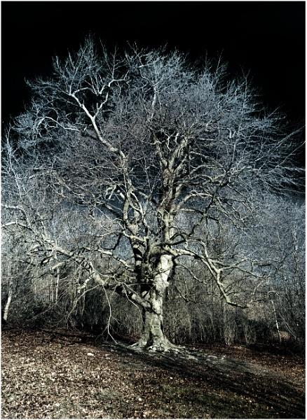 A Winter Tree 4 by capto