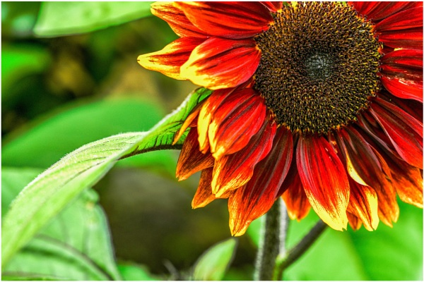 A bit of sunshine by ColleenA