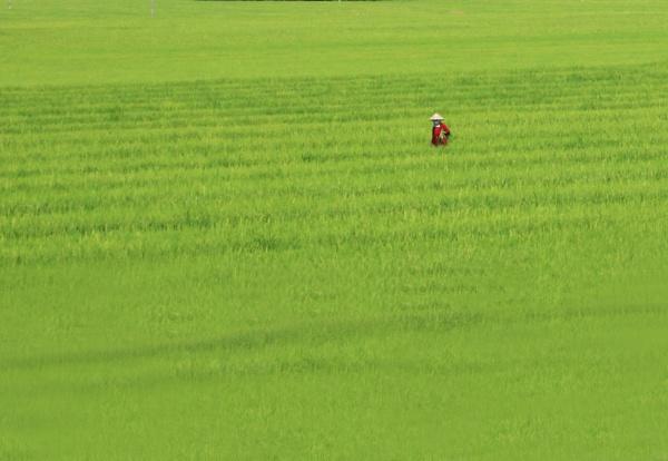 Rice by Karuma1970