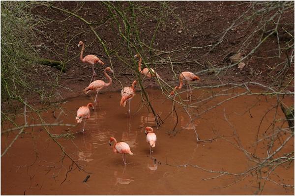 The Flamingo Pool by johnriley1uk
