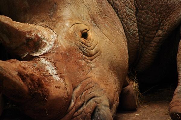 Relaxing Rhino by johnriley1uk