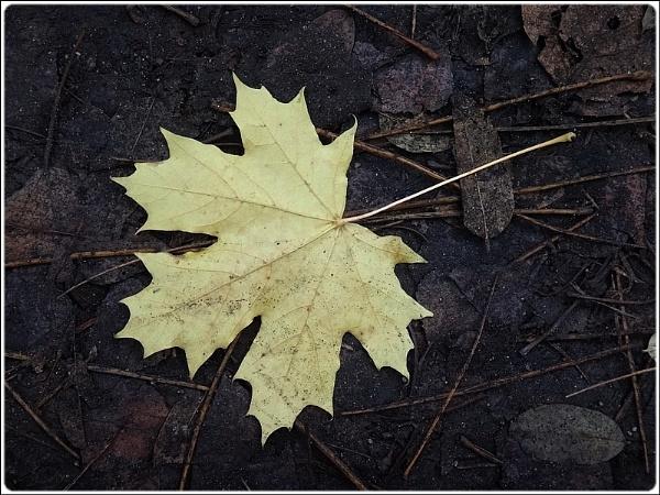 the last leaf by FabioKeiner
