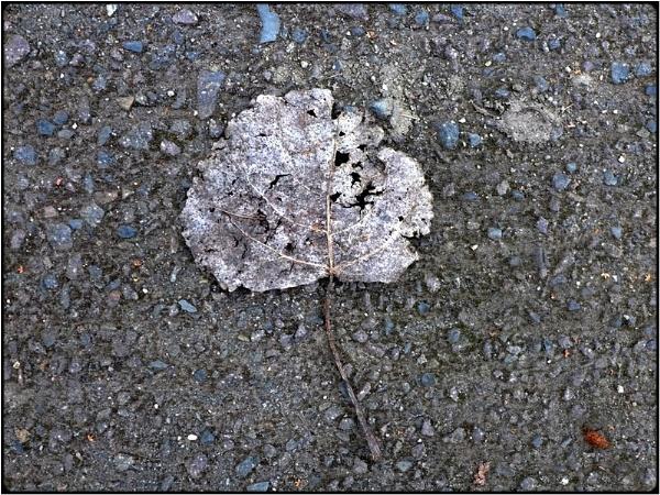 frozen leaf by FabioKeiner